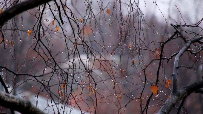 НаАлтае объявили штормовое предупреждение из-за снега игололеда