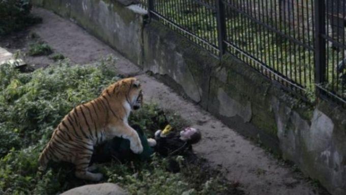 Насотрудницу зоопарка вКалининграде напал тигр