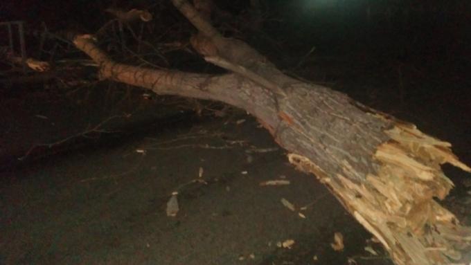 Шторм обосновал значимость сноса аварийных деревьев вБарнауле— Сергей Дугин