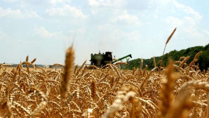 Минсельхоз РФ назвал решенными все вопросы поставки зерна вТурцию