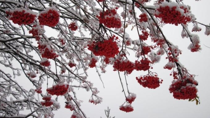 Небольшие морозы сохранятся вАлтайском крае 12ноября