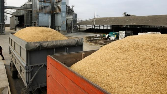 ВМинсельхозе рассмотрят предложения Алтайского края по нормализации рынка зерна
