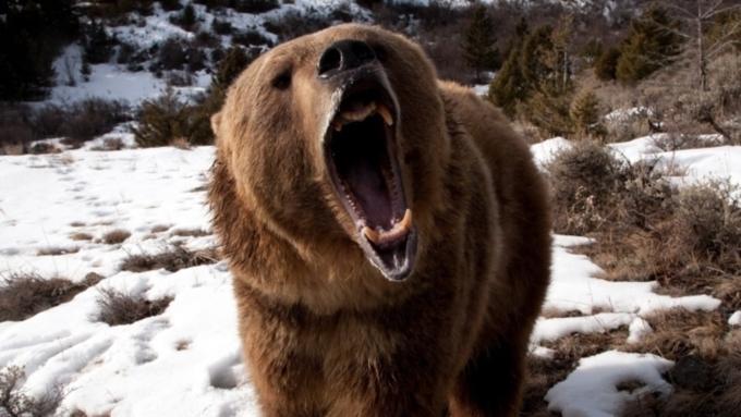 Медведь убил смотрителя маяка наКурилах