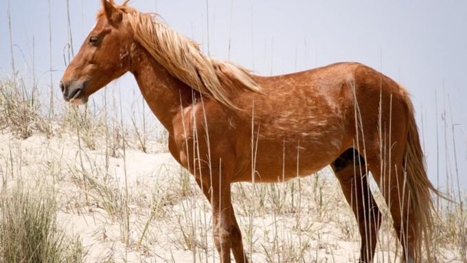 ВАлтайском крае мужчина похитил лошадь, чтобы съездить насвидание