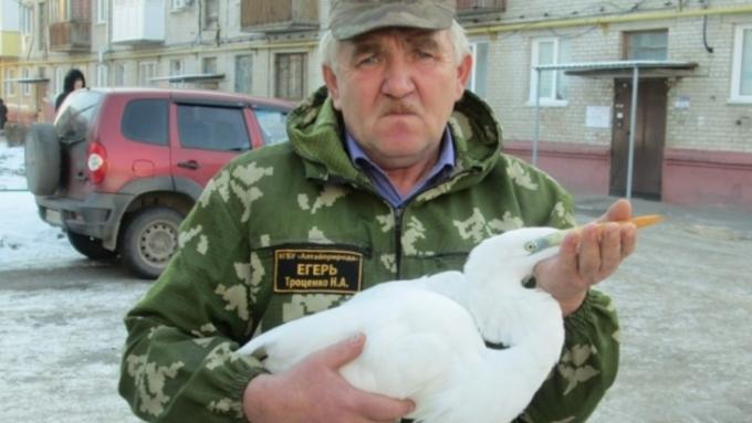 Алтайский егерь спас травмированную цаплю, занесенную вКрасную книгу