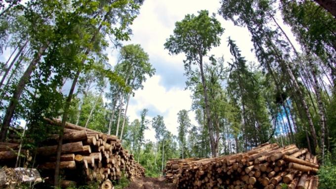 ВАлтайском крае глава сельсовета нелегально продавал древесину в КНР