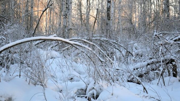 Погода наКрещение: Выпадет множество снега, однако сильных морозов небудет