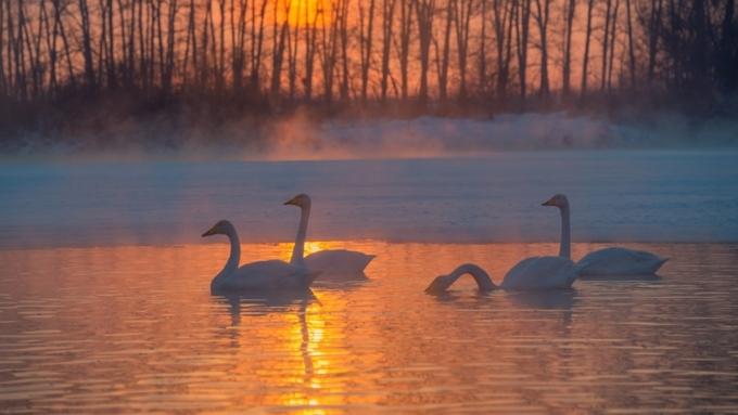 ВАлтайском крае из-за морозов заледенело незамерзающее озеро взаказнике «Лебединый»