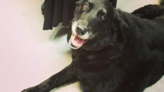 ВСША собачка вернулась кхозяевам через 10 лет после исчезновения