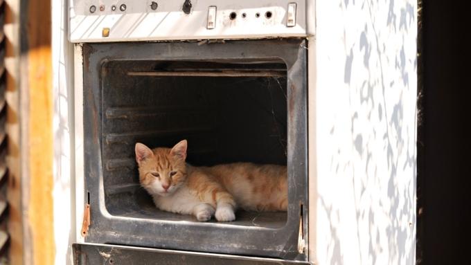 Подростки вКрасноярке сломали позвоночник изажарили вдуховке кошку
