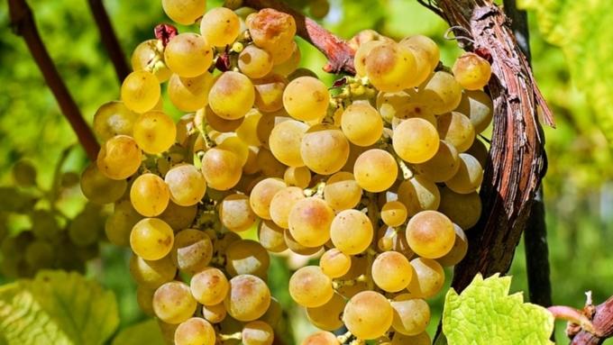 Ученые изсоедененных штатов обнаружили еще одну пользу красного вина ишоколада