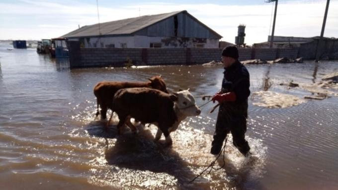 Неменее тысячи граждан подтопленных районов Алтайского края эвакуированы