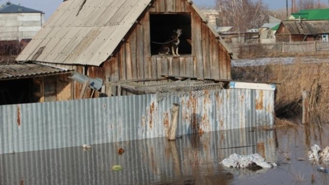Алтайский край попросит руководство РФ восполнить вред отпаводка