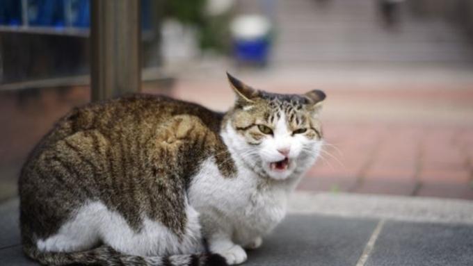 Работник посольства Китая в столицеРФ стал жертвой бездомного кота