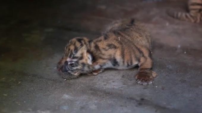 Лосю вБарнаульском зоопарке привезли приятельницу