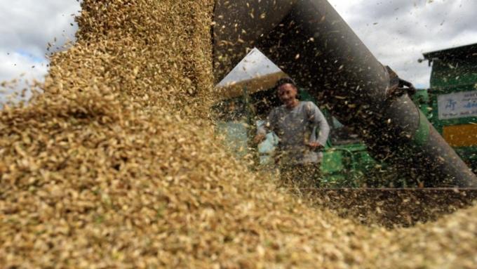 Руководство РФ снизило прогноз поэкспорту зерна