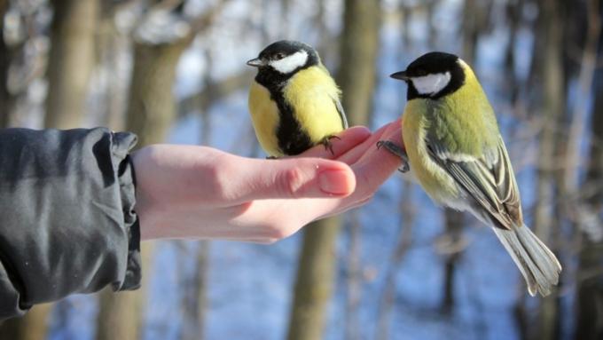 Жителей столицы попросили подкармливать птиц вморозы