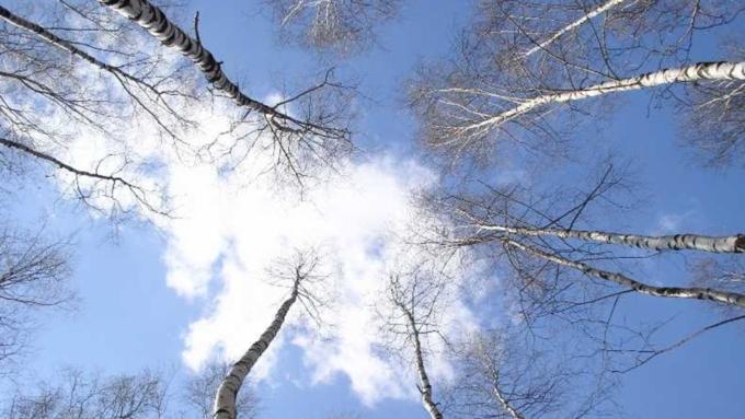 Тепло до +13 и без осадков: прогноз погоды в Алтайском крае на 26 марта