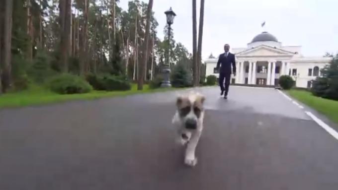 Щенок гуляет с премьером по двору резиденции