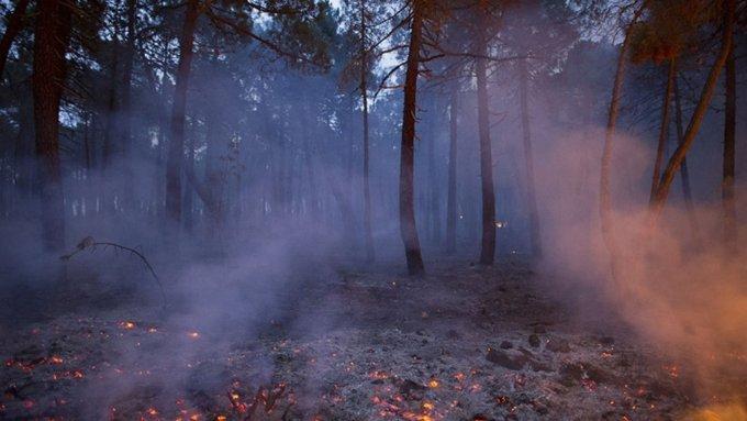 Ущерб от лесных пожаров подсчитали в Рослесхозе и сравнили с прошлогодним