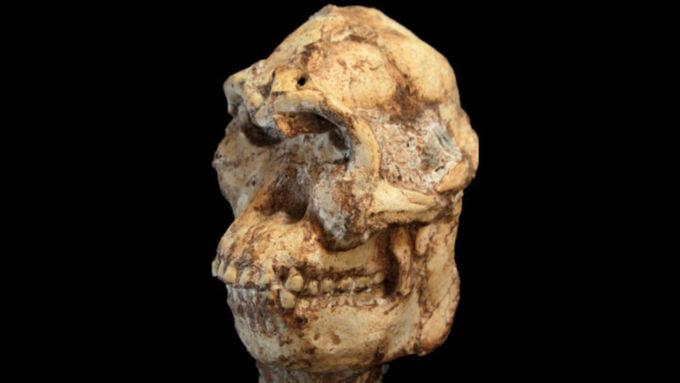 Найденный череп австралопитека опроверг теорию эволюции рода