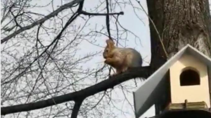 Белки прижились в Нагорном парке Барнаула