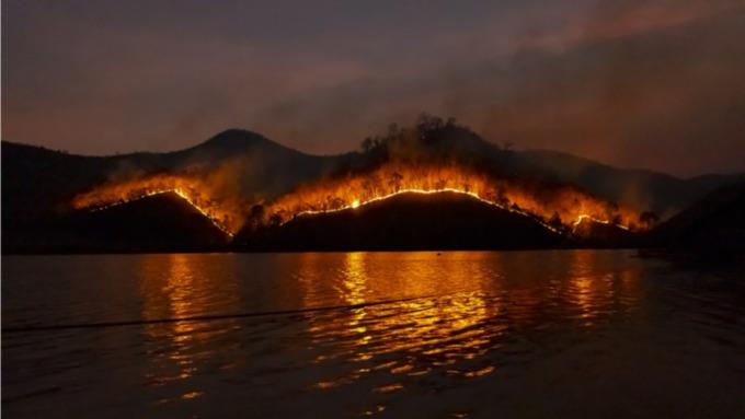 В Алтайском крае запретили посещать лес и разжигать костры