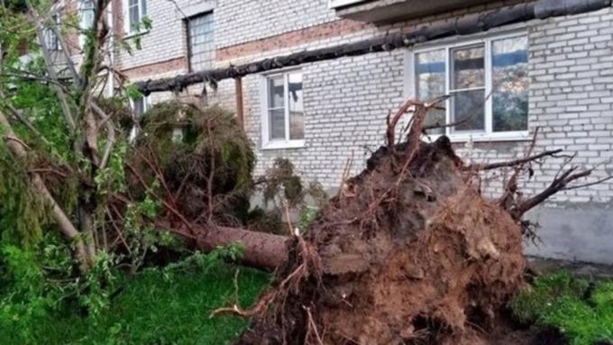 Сносило остановки и выворачивало деревья с корнями. Итоги разгула стихии в Алтайском крае