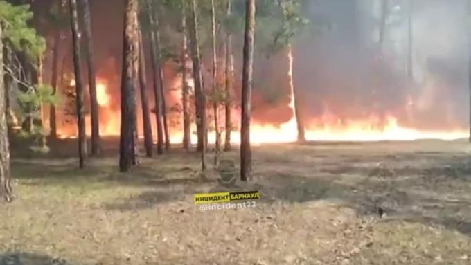Такой день. Избиение школьницы в Барнауле и природный пожар у алтайского села