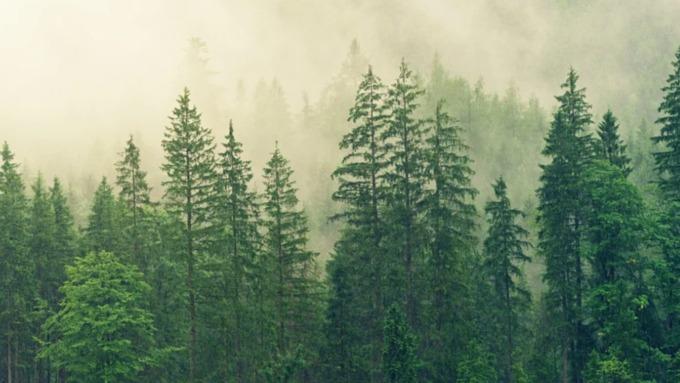 Боле 174 миллионов рублей выделили на восстановление лесов в Алтайском крае