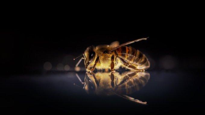 Больше двух миллионов пчёл погибли в Башкирии из-за обработки полей