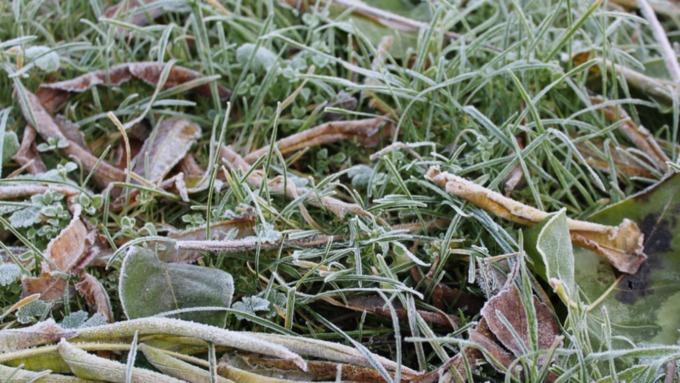 Жителей Алтайского края предупреждают о заморозках