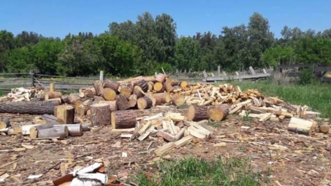 Двое жителей Алтайского края организовали бизнес по продаже краденых дров