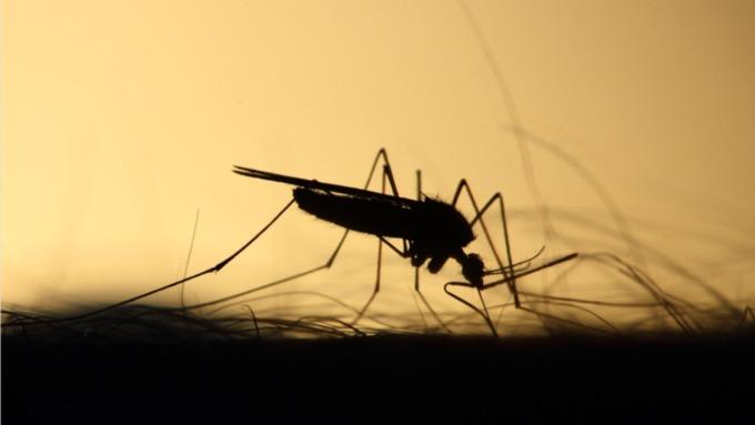 Жителей Алтайского края предупредили о надвигающейся новой волне комаров