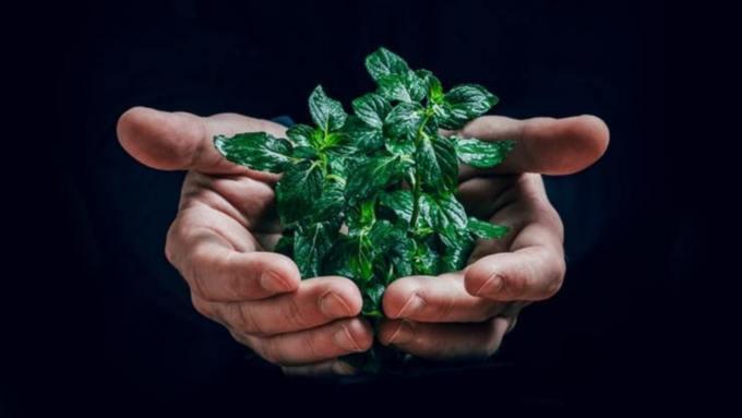 Десятая часть барнаульских компаний стали работать экологично