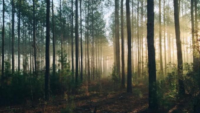 12-летняя девочка уехала в лес под Бийском и не вернулась