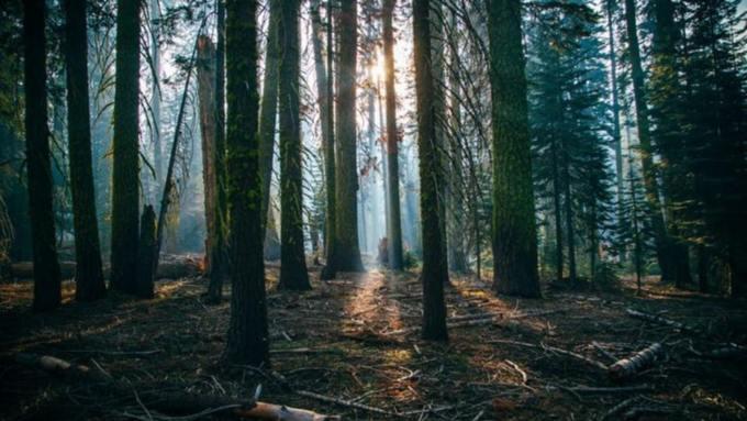 Под Смоленском полуторагодовалая девочка двое суток провела в лесу одна