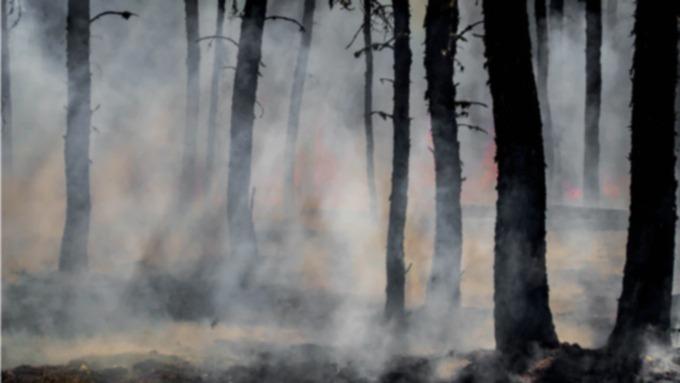 В Алтайском крае продлили штормовое предупреждение из-за угрозы пожаров