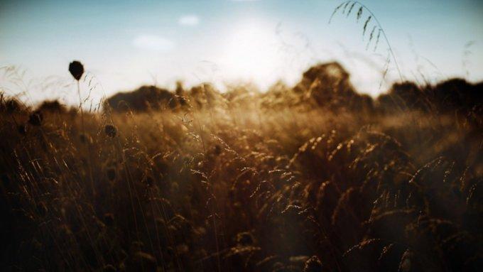 30 августа в Алтайском крае ожидаются жара и грозы