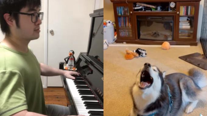 Пианист из Австралии делает смешные видео, играя в дуэте с орущими животными