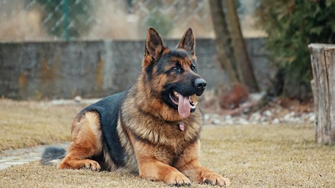 За последние дни в Алтайском крае жестоко убили нескольких собак