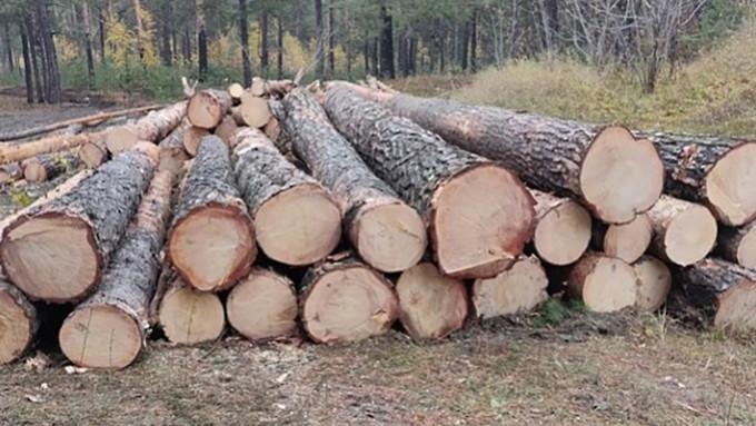"""Крик о помощи: барнаульцы жалуются на вырубку лесов """"кубами"""""""