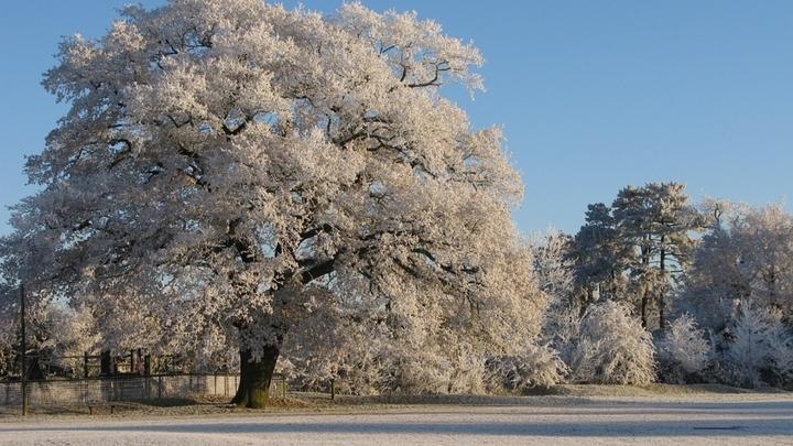 Учёные рассказали о вреде и пользе мороза для организма человека
