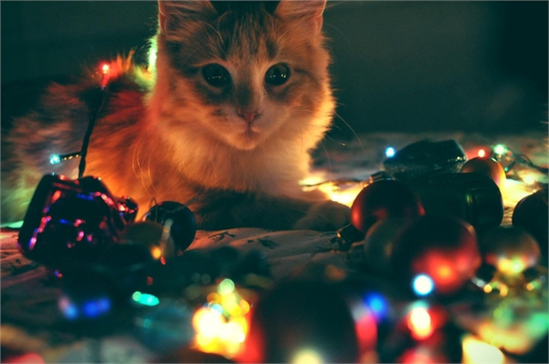 Картинки по запросу Котики ждут Новый год