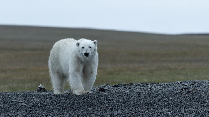 Экологическая катастрофа. Алтайский фотограф съездил в Арктику и наткнулся на трупы зверей