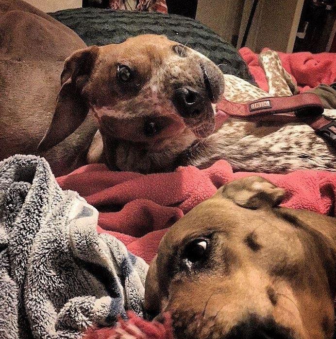 «Деформированная» собачка: Интернет обсуждает новейшую оптическую иллюзию