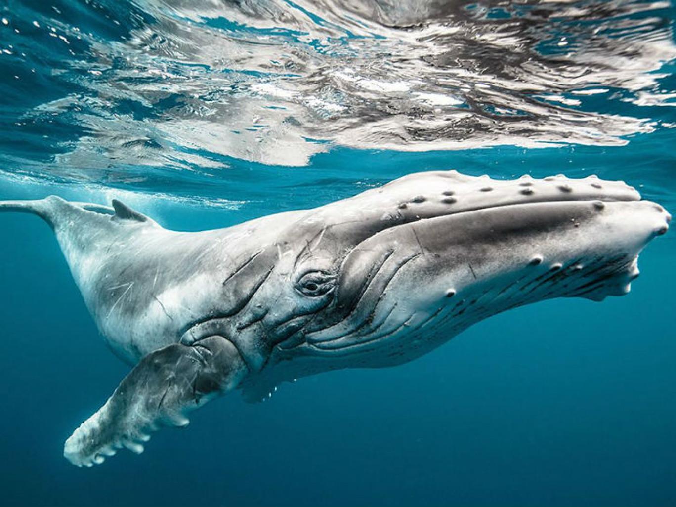 Член кита фото 21 фотография
